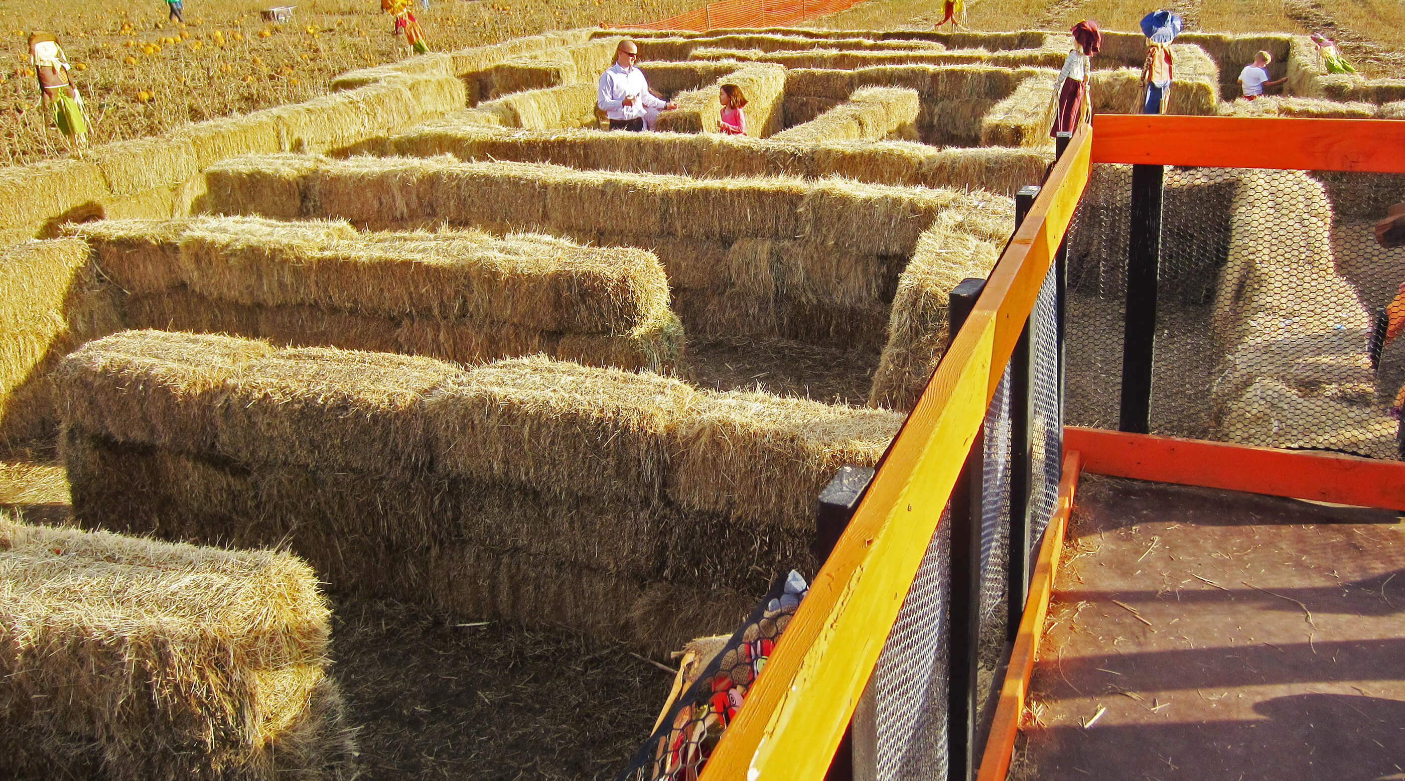 Pack Farms Hay Maze