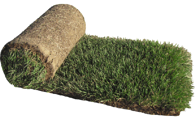 kentucky-bluegrass-sod